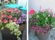 Blomstrende balkongkasser, krukker og potter pynter opp både ute i hagen, på terrassen og ved inngangspartiet. Slik lykkes du med krukkeplanting.