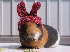 cozy hat @Cathrin Gaida Gaida Owens request!!
