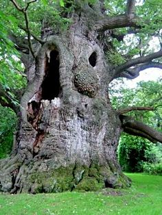 ideas oak tree bonsai plants for 2019 Weird Trees, Spooky Trees, Tree Faces, Unique Trees, Old Trees, Old Oak Tree, Nature Tree, Tree Art, Amazing Nature