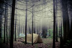 niebla en el bosque ourwildways: yeah, i could go for that now Camping In The Woods, Camping And Hiking, Outdoor Camping, Camping Hacks, Backpacking, Thats The Way, That Way, Closer To Nature, Going Home