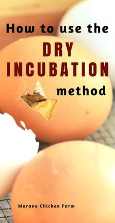 How to use the dry incubation method to increase your hatch rate. Using the dry incubation method minimizes the moisture inside the incubator and can raise hatch rate when high humidity is an issue.