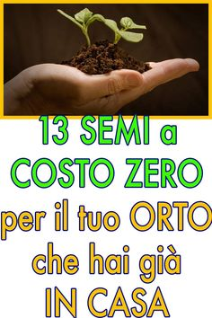 13 seeds at no cost for our garden available in our house Garden Paths, Garden Landscaping, Marimo, Green Life, Outdoor Projects, Indoor Garden, Botanical Gardens, Backyard, Plants