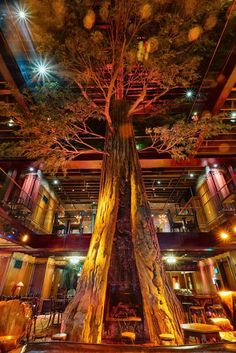 Clifton's Cafeteria in Downtown LA - this eclectic, iconic restaurant originally opened in 1935. It was closed in 2010, refurbished and reopened in 2015. its open multiple levels sport a giant faux redwood tree, waterfalls, stuffed animals: Bison, Grizzly Bear & others, several full bars - including a speakeasy tiki bar, a 250 pound meteorite, and the Bradbury Booth honoring the famous longtime customer. Food choices are wide: Jello, roast beef, pizza, Waldorf salad, mac & cheese, and much…