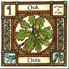 Oak, Ogham name Duir, rules 10th June to 7th July and is sacred to Zeus, Jupiter and Thor ~ all thunder Gods. At this time of year, althogh it is Midsummer, often storms are violent, and Oak trees are struck by lightening. But Oak wood is strong and used to build ships, house frames and doors for protection.