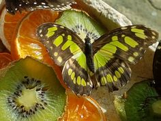 https://flic.kr/p/RHgwGy   Butterfly and fruit