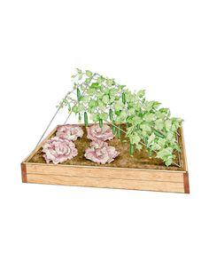 Cucumber Trellis, Medium for Easy Harvesting | Gardeners.com