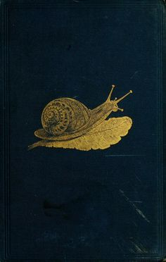 The edible Mollusca of Great Britain and Ireland : - Biodiversity Heritage…