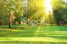 Green lawn with trees in park under sunny light Green Park, Park Photos, Fantastic Art, Lawn, Golf Courses, Royalty Free Stock Photos, Scene, Image, Beautiful