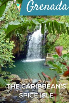 Annandale Falls - Guide to a one day visit In Grenada: The Caribbean's Spice Isle during a cruise excursion - Grenada with kids - Cruise shore excursion: Cruise Excursions, Shore Excursions, Cruise Travel, Caribbean Vacations, Caribbean Cruise, Grenada Caribbean, Royal Caribbean, Vacation Trips, Vacation Spots