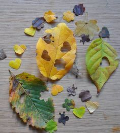 How to make your own eco-friendly, recycled and biodegradable natural leaf wedding confetti from the leaves in your garden, woods, parkland etc.