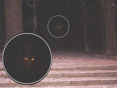 """Referred to as """"Demon in the Dark"""" by the photographer.  Not sure what it is, but it's scary!"""