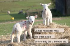 Seriously...what kind of a-hole eats lamb?
