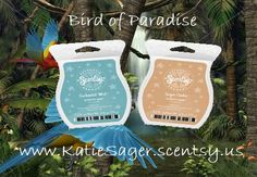 Get your bars here to have your home smell like Bird of Paradise www.teresarausch.scentsy.us #EnchantedMist #SugarCookie