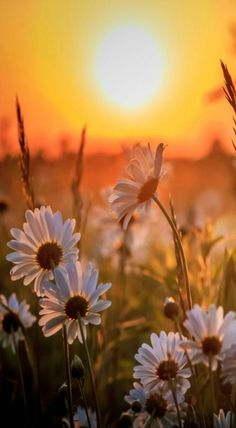 Wonderful Sunset with Margaritas Beautiful Nature Wallpaper, Beautiful Landscapes, Beautiful Flowers, Sunrise Pictures, Nature Pictures, Scenery Wallpaper, Wallpaper Backgrounds, Landscape Photography, Nature Photography