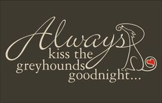 Always Kiss The Greyhounds Goodnight... Image