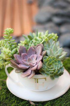 succulents in a tea cup - tutorial - gift, favor, centerpiece