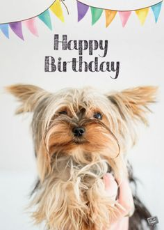 look animal indoor beautiful young Free Photo Happy Birthday Dog, Birthday Wishes And Images, Birthday Wishes For Friend, Happy Birthday Pictures, Birthday Wishes Cards, Happy Birthday Messages, Happy Birthday Quotes, Birthday Greetings, Cupcake Birthday