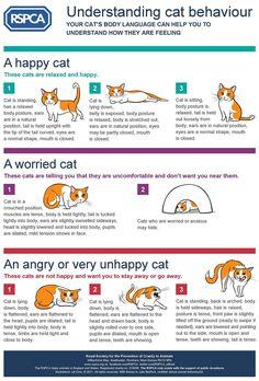 Understanding cat behaviour #CatBehaviour - Know more about Cat Behaviour at Catsincare.com!