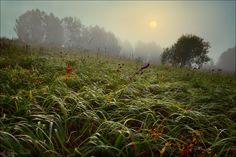 Herb | Andrey59 - Andrey Shumilin City:  Rossiya (Russia) / Novokuznetsk Site:   http://Andrey59.photosight.ru/