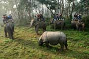 http://www.traveladvisortips.com/royal-chitwan-national-park-tours-and-things-to-do/ - Royal Chitwan National Park – Tours and Things To Do!