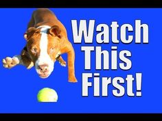 HUGE playlist of positive dog training basics (in order or importance according to trainer Zak George) 40+ Videos, great resource
