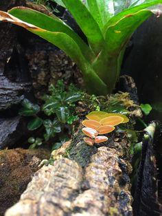 Frog Tank, Tanks