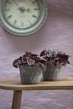Juodi augalai: kuo jie ypatingi