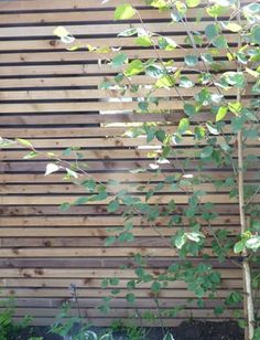 Garden Ideas To Hide A Wall cool way to hide ugly retaining wall | landscaping retaining walls