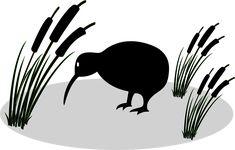 Free Image on Pixabay - Anonymous, Bird, Kiwi, Plant, Reed Kiwi, Copyright Free Images, Free Pictures, New Zealand, Anonymous, Animals, Plant, Exotic Animals, Animales