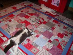 cats on quilt