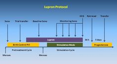 Excellent explanation of a Lupron protocol