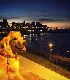 Dogs, Animals, Mar Del Plata, Animales, Animaux, Pet Dogs, Doggies, Animal, Animais