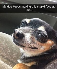 Animal Pictures Memes to Make You Laugh - 13