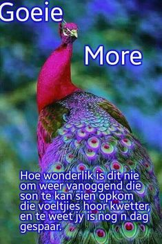 Good Morning Wishes, Good Morning Quotes, Goeie Nag, Goeie More, Afrikaans Quotes, Special Quotes, Morning Greeting, Happy Anniversary, Prayers