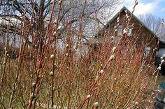 22 Best danica images | Plants, Shade garden plants, Ferns