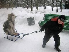 This is something my dog would make me do