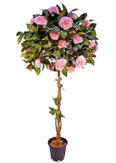 Camellia Tree: Gardening Landscaping, Camellia Tree, Plants Trees, Secret  Garden, Outdoor