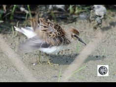Nature Sauvage, Shorebirds, Wild Nature, Wilderness, Canada