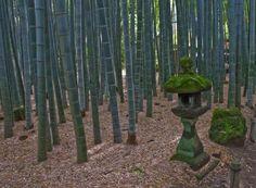 Hokokuji, le temple des bambous | Vivre le Japon.com