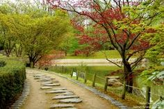 Image result for japanese garden