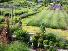Lavender Herb Farm in Okanagan Valley