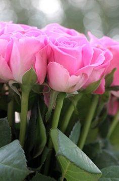 ♥ Beautiful flowers :) garden gardening pretty cool fashion design  flower