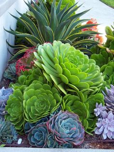 Mix colours, shapes and textures when planting succulents for added interest.