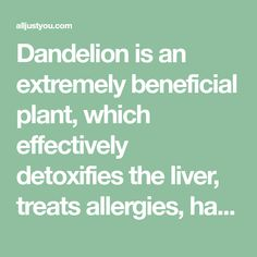 Dandelion is an extremely beneficial plant, which effectively detoxifies the liver, treats allergies, has diuretic properties, lowers cholesterol, stimulates the formation of bile,
