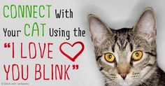 "Jackson Galaxy, an animal activist and host of ""My Cat from Hell,"" talks about how important it is for cat owners to discover their ""Cat Mojo."" http://healthypets.mercola.com/sites/healthypets/archive/2014/10/19/jackson-galaxy-cat-behaviorist.aspx"