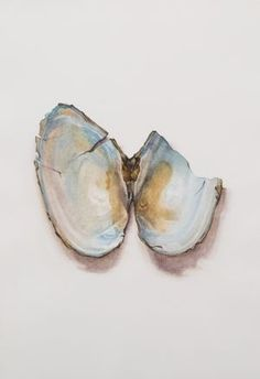 Saara Vainio: Näkinkenkä II / Shell II Watercolour, 17 x 25 cm 2011 Watercolour, Coasters, Past, Shells, Summer, Watercolor, Shelled, Past Tense, Watercolor Painting