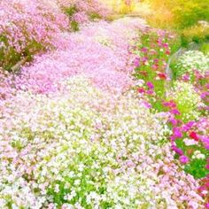 Carpet of Pretty Pastel Flowers