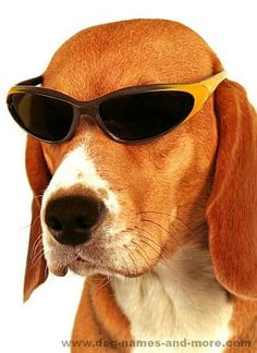 This cool pooch is the spokesdog for our Cool Dog Names page....He also thinks he's too cool to be on Pinterest.