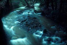 Sinbad Creek (salmonid habitat), Trib of Alameda Ck. S93.15.13543 | OMCA COLLECTIONS