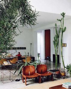 maurizio-zucchi-cactus-temple-home_2